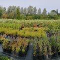 Teadmised taimekasvatusest ja aiailust vajavad edasiandmist