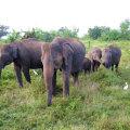 Elevandid Udawalawe rahvuspargis. Fotod: erakogu, vida press