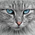 ТОП-8 самых умных пород кошек