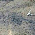 FOTOD: Arizonas päästeti 9 päeva eksinud olnud ja maapinnale roigastest APPI! kirjutanud naine