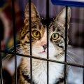 Varjupaika sattunud kassid on sageli stressis, samas lubab linnaga sõlmitud leping stressis looma hukata.