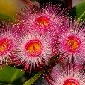 ФОТО | Время пришло. 7 экзотических комнатных растений, которые пора начать выращивать дома
