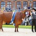Tartu Agro punased lehmad on olnud edukad nii näitustel kui ka tootmises.
