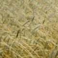 Soome võib tuua oma vilja Eestisse hoiule