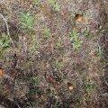 ФОТО читателя Delfi: Идете по грибы? Загляните в лес Мяннику
