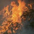 Austraalia Victoria osariigis kutsuti kümneid tuhandeid põlengute eest evakueeruma, mõnede jaoks on aga juba liiga hilja
