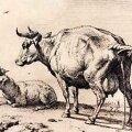 """Armsa kodulooma portree: Paulus Potter """"Pissiv lehm"""" (ofort)."""