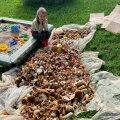 Evely Tamme pere seenesaak Lääne-Virumaal.