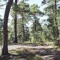 Politsei aitas nädalavahetusel metsast välja 17 eksinud seenelist