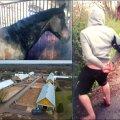 ВИДЕО | Скандал на старейшей эстонской конюшне: зоофил годами насиловал лошадей и был пойман во время акта