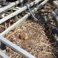 Как предотвратить конфликты между птицами, животными и собственниками домов?