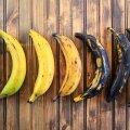 Jahubanaanide värvus sõltub küpsusastmest ja varieerub rohelisest mustani.