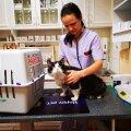 Pekstud kass vaadati loomakliinikus üle
