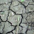 Läti kriisihaldusnõukogu tegi valitsusele ettepaneku kuulutada põua tõttu välja üleriiklik loodusõnnetus