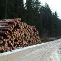 LUGEJA FOTOD: Kuhu kaob Eesti mets?