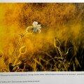 """Kuldne vihm osutus võltskuldseks: Foto, mille Riho Kaur esitas enda fotona pealkirja all """"Kuldne vihm"""" ja pälvis sellega Looduse Aasta Foto 2013 žürii tunnustuse, on tegelikult välismaalase Ben Doveri tehtud. Pildil lehekülg Aasta Loodusfoto  2013 raamatust."""