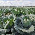 Из-за нехватки работников на полях в Эстонии могут вырасти цены на продукты питания
