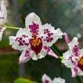 Luunja Maanaiste Seltsi suvi: reisid ja toitlustuse korraldamine orhideepäeval