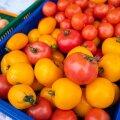 GUUD, BÄÄD & NÄDALA SÕNA   Elagu tomat!