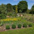 Lilli ja köögivilju võib vabalt koos kasvatada Pildil Riima Randviiru Muhu portselaniaed Liival.