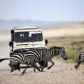 Serengeti: sebradel on alati roheline tuli.