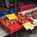 Eesti maasikad Tartu avaturul maksid nii 5 kui ka 12 eurot kilo.