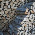 Osa maailma pikimast puuriidast müüakse oksjonil maha