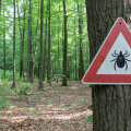 Puugid on ohuks inimeste tervisele