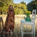 FOTOD | Vananaistesuvi Hiiumaal. Vaata, millise rikkuse ja värvikülluse püüdis pildile fotograaf Meeli Küttim