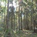 Пограничники помогли пожилому мужчине, которому стало плохо в лесу