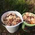 KASULIK AITAB | Kuhu minna seenele, kui oled algaja?