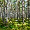 Kuidas täpselt mõjub ikkagi aias tegutsemine või kontoriaknast roheluse vaatamine meie vaimsele tervisele?