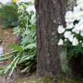 Pärnamäe kalmistul