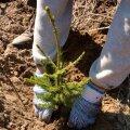 Puud istutamata jättev erametsaomanik kaotab 5000 eurot hektari kohta