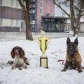 ФОТО   Пыхьяская префектура наградила лучших служебных собак и кинологов. Они находили преступников, оружие и наркотики