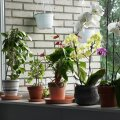 Чем полезны растения в доме: факты и приметы