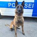 Профессионал своего дела! Полицейская собака Шарки нашла наркотики, спрятанные в автомобиле виновника ДТП