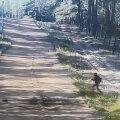 VIDEO   Valgevene-Leedu piiril tabas kaamera üle tara ronivad ja metsa silkavad aafriklased