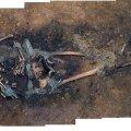 A) Kukruse kalmistu matus. Muna asukoht on tähistatud punase ringiga. B) Lähikaader osaliselt säilinud punase pigmendiga värvitud munakoore fragmendist. Autor/allikas: Marko Usler, Signe Vahur.