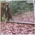 Leopard peeglis