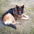 Ka selle Ihastes ebanormaalsetes tingimustes peetud liigesehaige koera juhtum tekitas loomakaitsjate ja PTA vahel konflikti