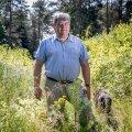 Andres Talijärv oma kodu kõrval asuval langil, mis uuendati männiga kolm aastat tagasi. Põhjus, miks inimesed raiumiste pärast pahandavad, peitub Talijärve hinnangul selles, et nad ei mõista metsas toimuvat.