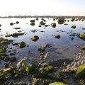 ФОТО: Балтийское море и английское радио