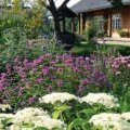 Hästi planeeritud aed võlub lopsakuse ja õiteküllusega. Foto: Margus Proos