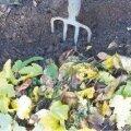 Nädala aiatööd 22.-28. oktoober