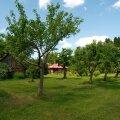 Vanaema aias on õunapuid palju ja igaks elujuhtumiks - moosiks, mahlaks või hoopis kompotiks.