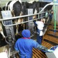 Piimafarm Eestis