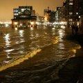 Hamburgi kalaturg
