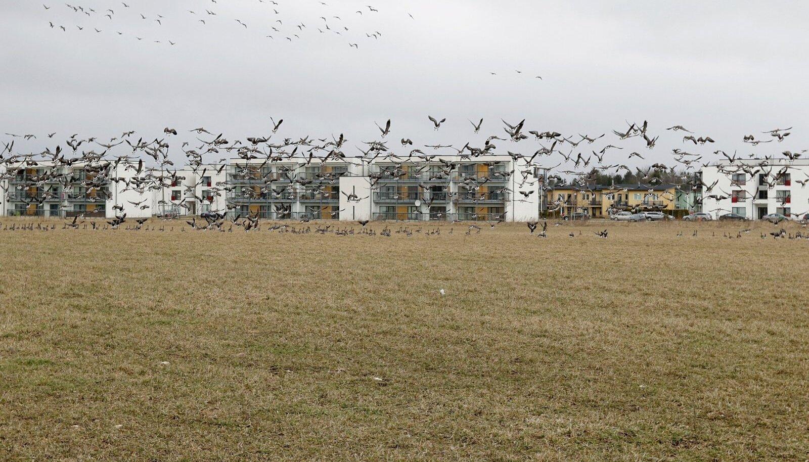 Peetri külast võib tulevikus saada aeglaselt tühjenev pensionäride piirkond. Eestis ei sünni piisavalt lapsi, kes nende kortereid kunagi endale sooviksid.