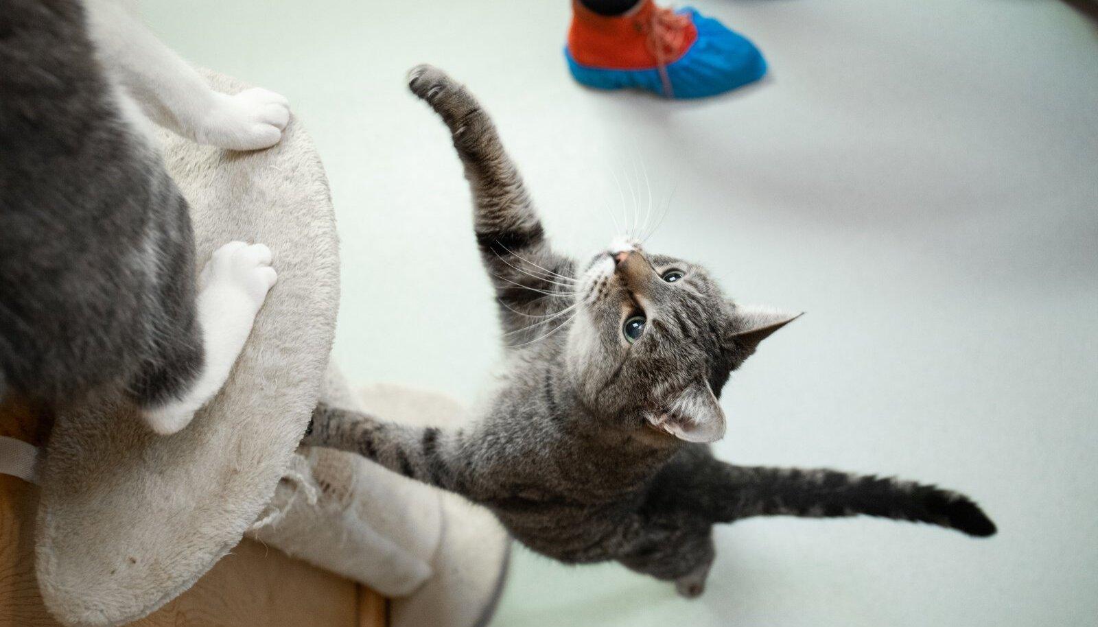 Kass Tallinna loomade varjupaigas
